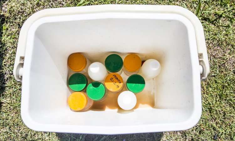Water and Soil samples