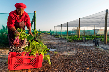 Agricultural female farmer support
