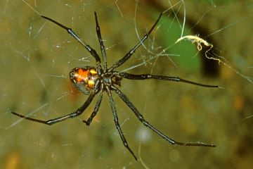 Types of Spiders