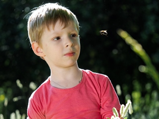 Bumblebee flying towards a young boy's face. He looks at the flight of the bee.