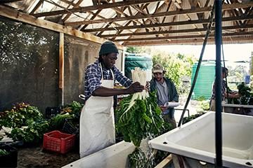 Local farmers washing produce on the farm.