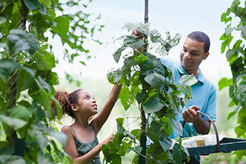 Father and Daughter Working in a community garden