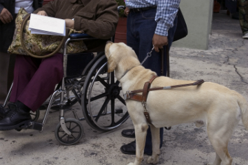 Guide dog and wheel chair