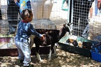 kid-petting-goat.jpg