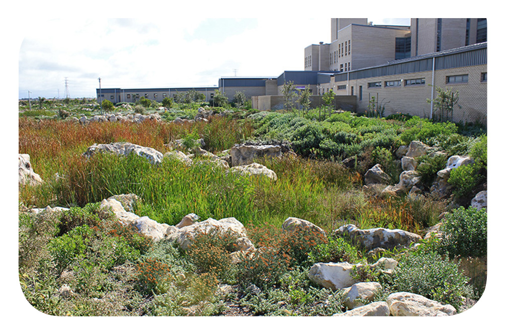 Mitchells Plain Hospital Landscape