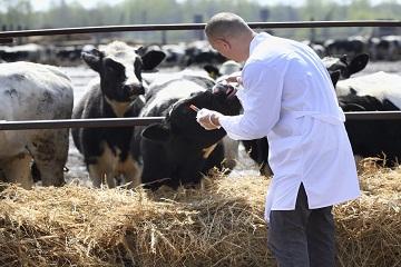 male-cow-veterinarian