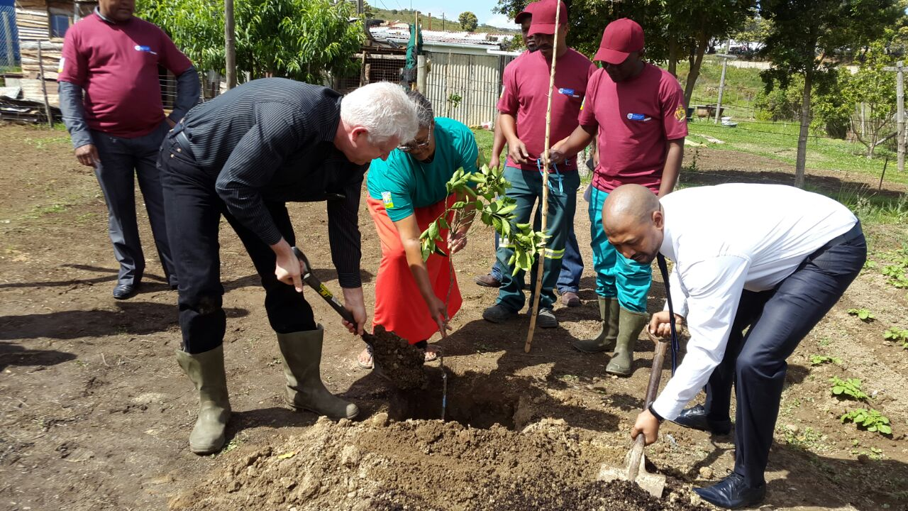 Minister Winde helps with the planting of trees.