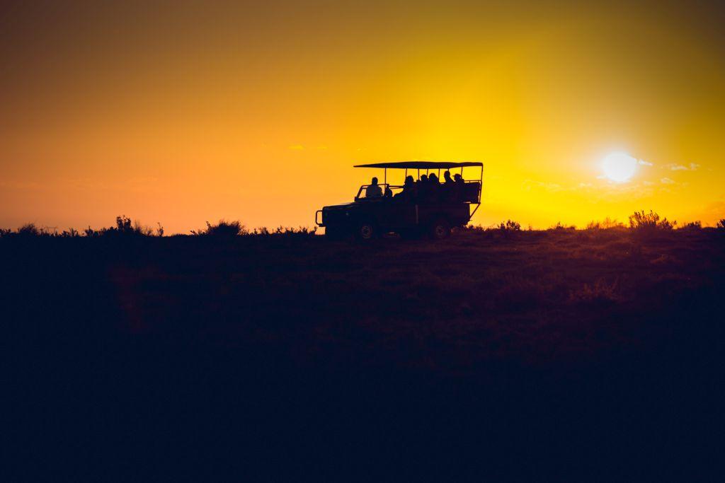 morning drive on safari