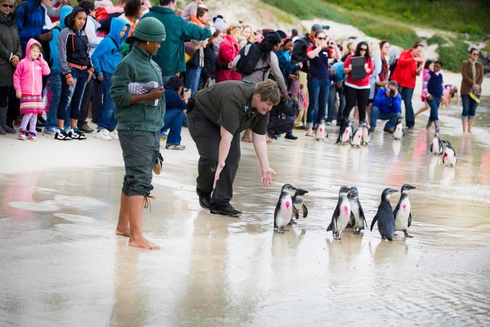 2014 Penguin Festival
