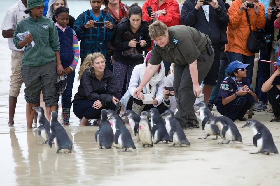 Penguin Festival 2014