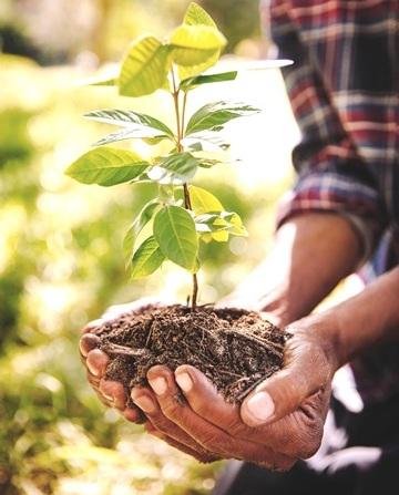 planting a tree sapling