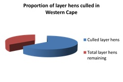 proportion_of_layer_hens_culled_in_wc.jpg