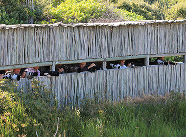Malachite bird hide at Intaka Island in Century City