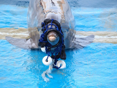 dolphin caught in plastic