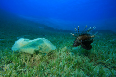 plastic bag under the ocean