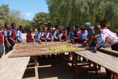 Learners being educated in grape harvesting techniques