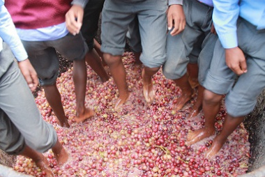 Learners had a lot of fun treading the grapes