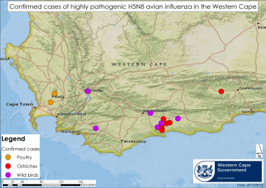 Map of confirmed avian influenza cases in the Western Cape