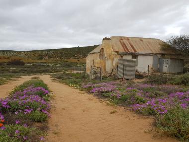 Namakwaland flowers and landscape