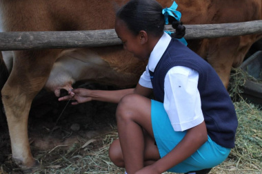 One of the learners milking a cow