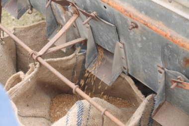 Operation of the wheat threshing machine demonstrated