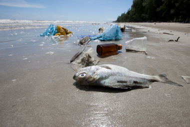 plastic pollution at waters edge on beach