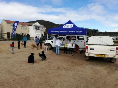 Rabies Vaccination site in Klapmuts