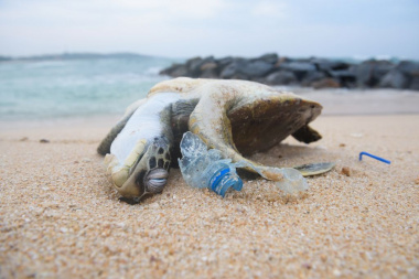 turtle killed by plastic