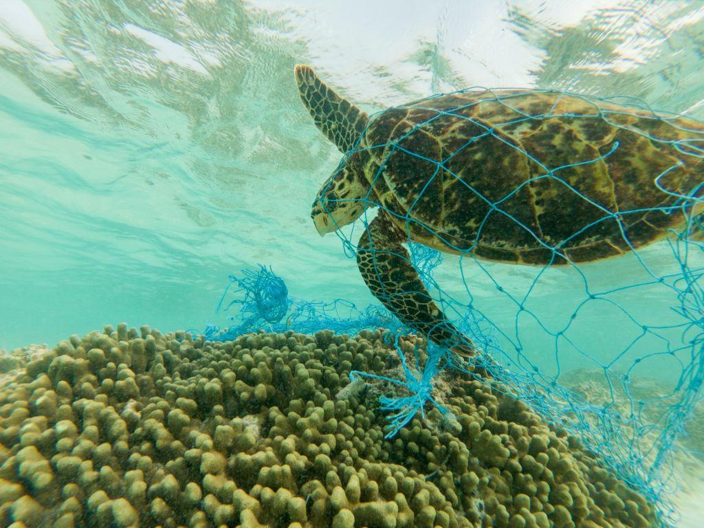 Plastic Pollution | Western Cape Government