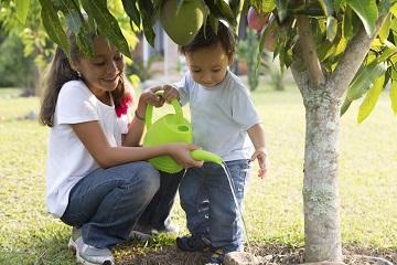 Children tending to tree