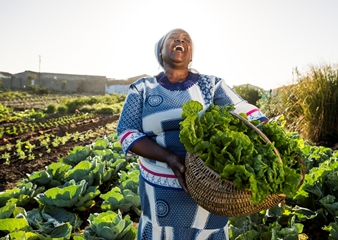 Western Cape Agriculture